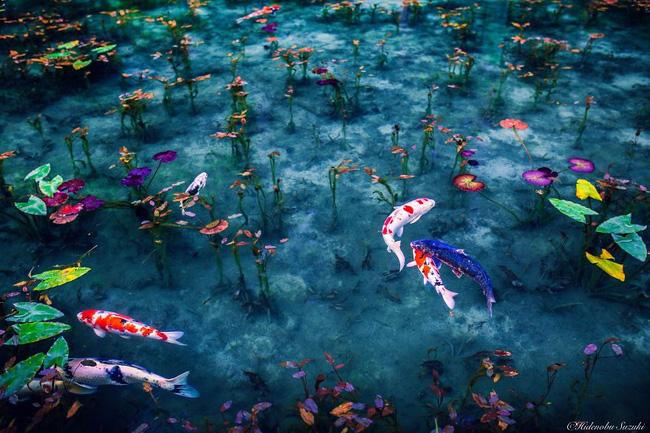Ngắm nhìn Nhật Bản vào mùa mưa còn đẹp hơn cả tranh vẽ - Ảnh 2.