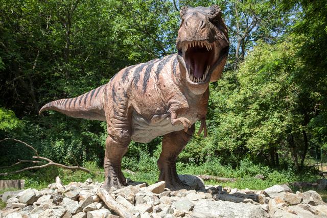 Phát hiện mới có thể giúp giải thích vì sao khủng long T-Rex có cánh tay rất nhỏ - Ảnh 2.