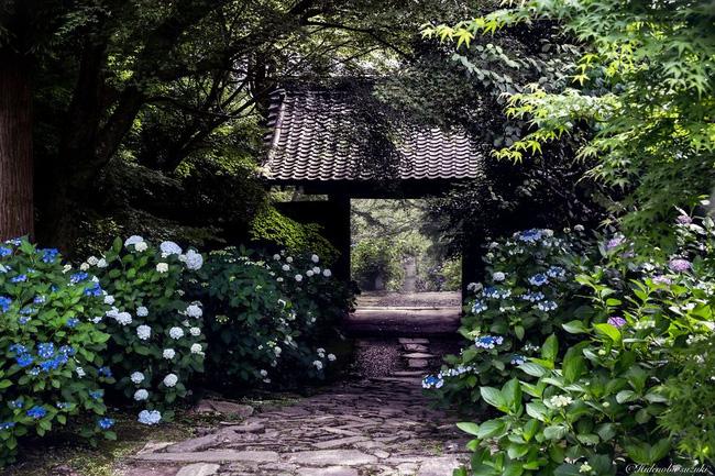Ngắm nhìn Nhật Bản vào mùa mưa còn đẹp hơn cả tranh vẽ - Ảnh 3.