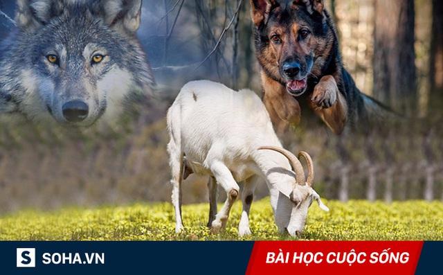 Cứu dê khỏi miệng sói, chó vạch mặt đám bạn chỉ biết khua môi múa mép: Ai cũng nên ngẫm!