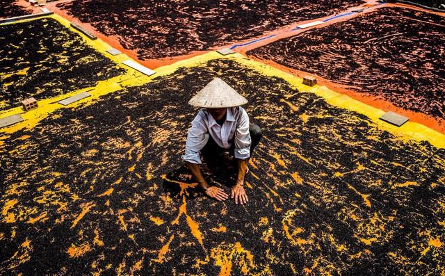 24h qua ảnh: Cảnh nông dân Phú Quốc phơi hồ tiêu lên báo Anh