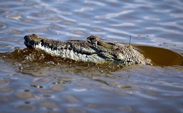 Con trai bị cá sấu lôi xuống sông, người mẹ lập tức làm một việc cứu sống được cậu bé