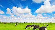 Ra mắt sản phẩm sữa tươi Organic, Vinamilk nhắm tới đối tượng khách hàng cao cấp