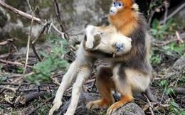 24h qua ảnh: Rơi nước mắt cảnh khỉ mẹ ôm xác con kêu khóc