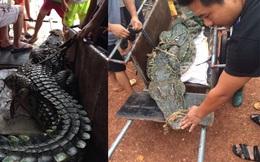 Những hình ảnh đáng sợ về con cá sấu dài gần 3 mét, nặng hơn 70kg
