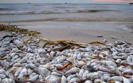 Toàn cảnh vụ cá chết hàng loạt tại miền Trung