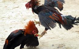 Thanh niên bị đâm chết vì mâu thuẫn lúc đá gà
