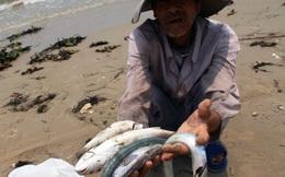 Chuyên gia nói gì sau khi xác định nguyên nhân cá chết do Formosa?