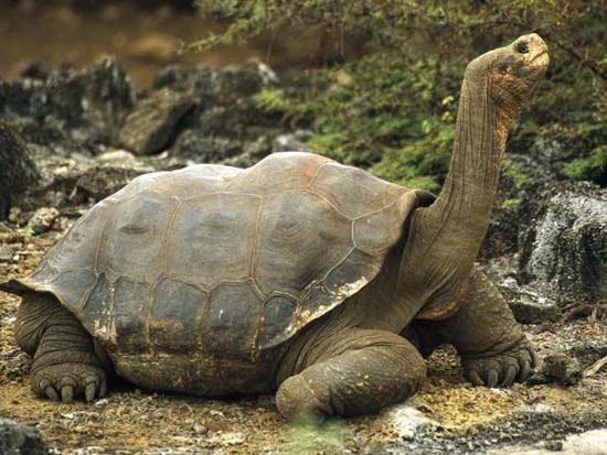 1001 thắc mắc: Loài động vật nào sống cả 1.000 năm? - Ảnh 3.