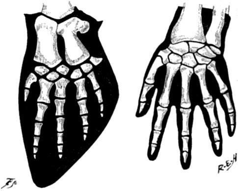 Tại sao xương vây của cá voi có năm ngón trông giống bàn tay con người? - Ảnh 5.