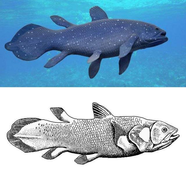 Tại sao xương vây của cá voi có năm ngón trông giống bàn tay con người? - Ảnh 7.