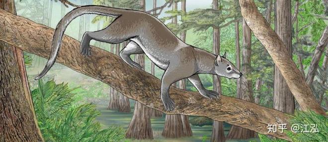 Khám phá khảo cổ mới cho thấy chó và mèo trước đây có chung một tổ tiên - Ảnh 1.
