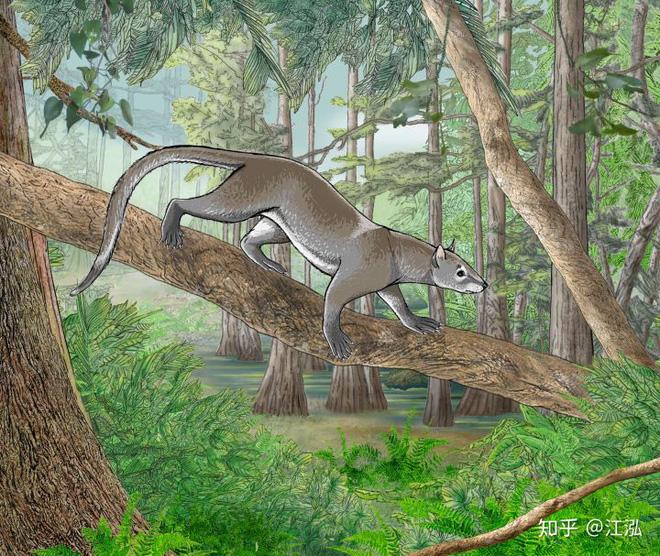Khám phá khảo cổ mới cho thấy chó và mèo trước đây có chung một tổ tiên - Ảnh 10.