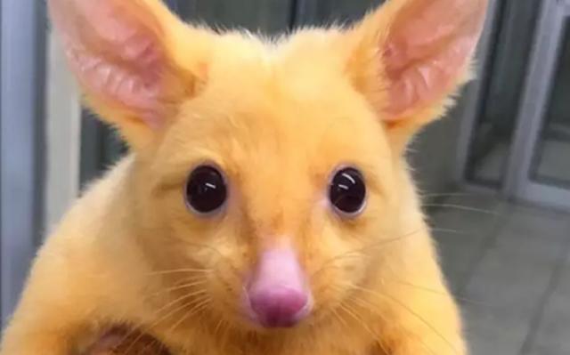 Những loài động vật sở hữu bộ lông kỳ lạ nhất thế giới