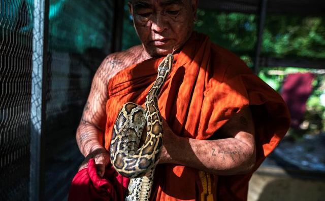 7 ngày qua ảnh: Nhà sư chơi với trăn khổng lồ trong tu viện ở Myanmar