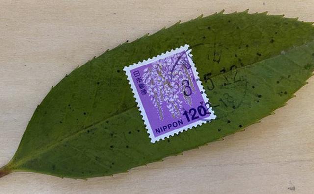 Đẳng cấp dịch vụ bưu chính Nhật Bản: Chỉ cần dán tem, một chiếc lá cũng được chuyển giao nguyên vẹn
