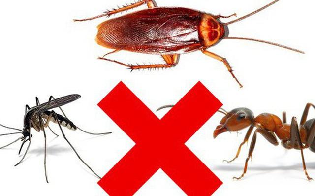 Mách bạn 3 mẹo an toàn giúp bạn trừ khử mấy con côn trùng đáng ghét