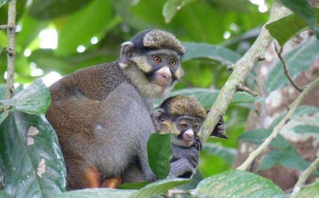 Sách Đỏ mới cập nhật: Lần đầu tiên trong lịch sử có hơn 100.000 loài bị đe dọa, 28.300 mang nguy cơ tuyệt chủng