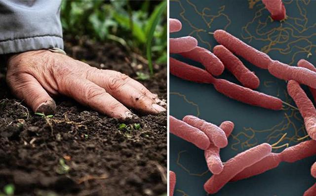 Bộ Y tế khuyến cáo người dân 5 cách phòng chống bệnh Whitmore