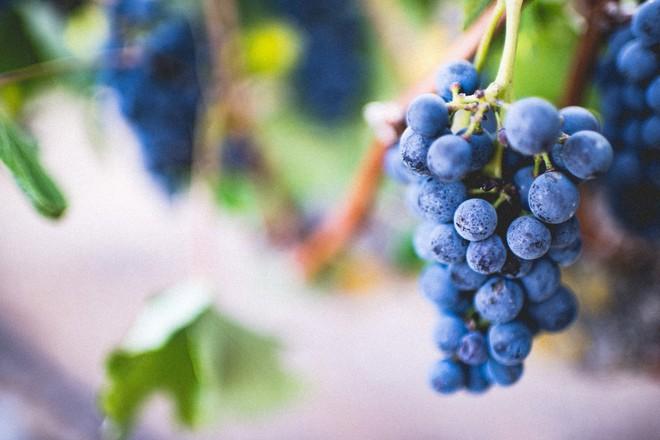 10 loại trái cây tốt cho từng bộ phận cơ thể - Ảnh 3.