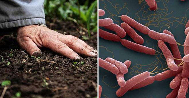 Bộ Y tế khuyến cáo người dân 5 cách phòng chống bệnh Whitmore - Ảnh 1.