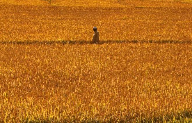 24h qua ảnh: Hươu đực gọi bạn tình trong sương sớm mùa thu - Ảnh 6.